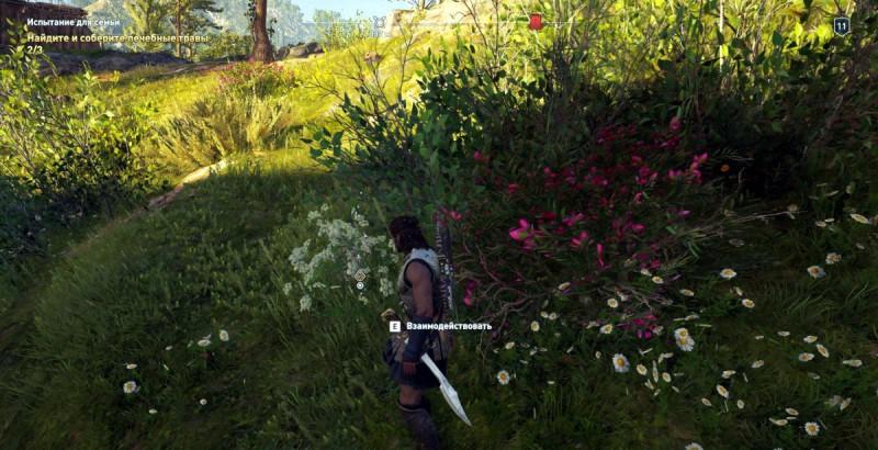 Собрать лечебные травы